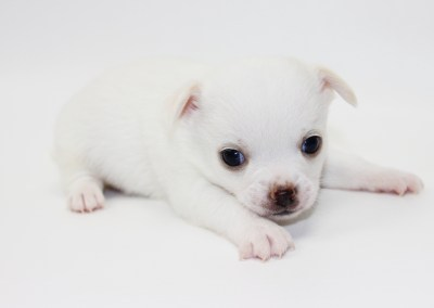 Toddy - 4 Weeks Old - 1 lb 2.4 ounces