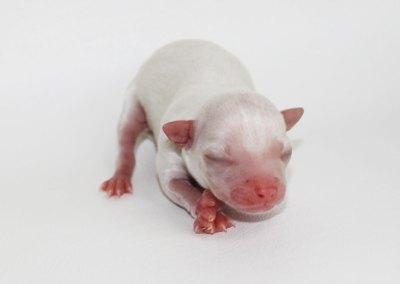 Sam - Born July 25 2015 - 3.7 ounces