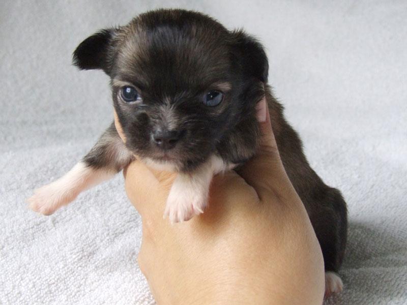 Bella - 3 Weeks Old