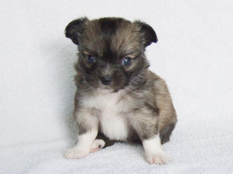 Bella - 4 Weeks Old - Weight 13 3/4 ozs.