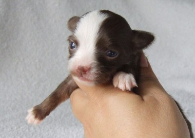 Chanel - 2 Weeks Old - Weight 7 1/4 ozs