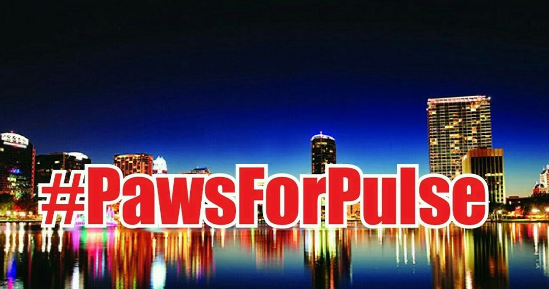 Amazing Day – Paws for Pulse  Was A True Success