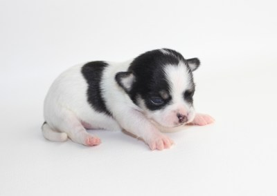 Rio - 2 Weeks Old - Weight 10.3 ozs