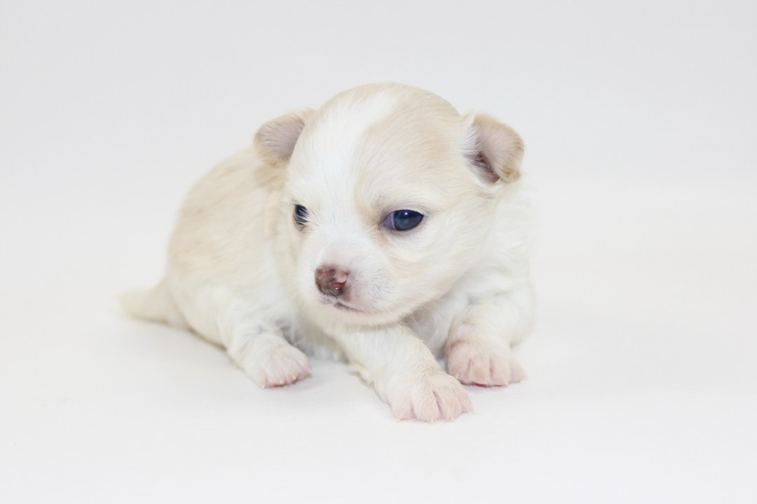 Sandy - 3 Weeks Old - Weight 14.3 ozs
