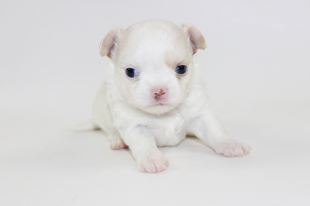 Vice - 4 Weeks Old - Weight 1 lb 3.9 ozs