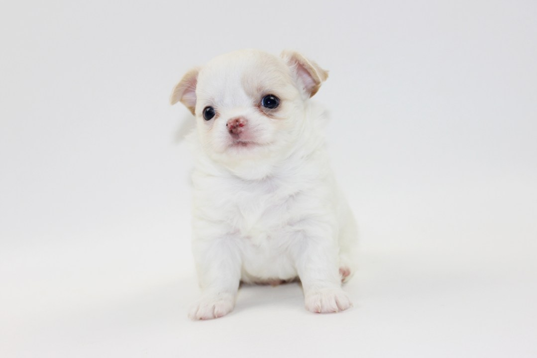 Vice - 5 Weeks Old - Weight 1 lb 8 ozs