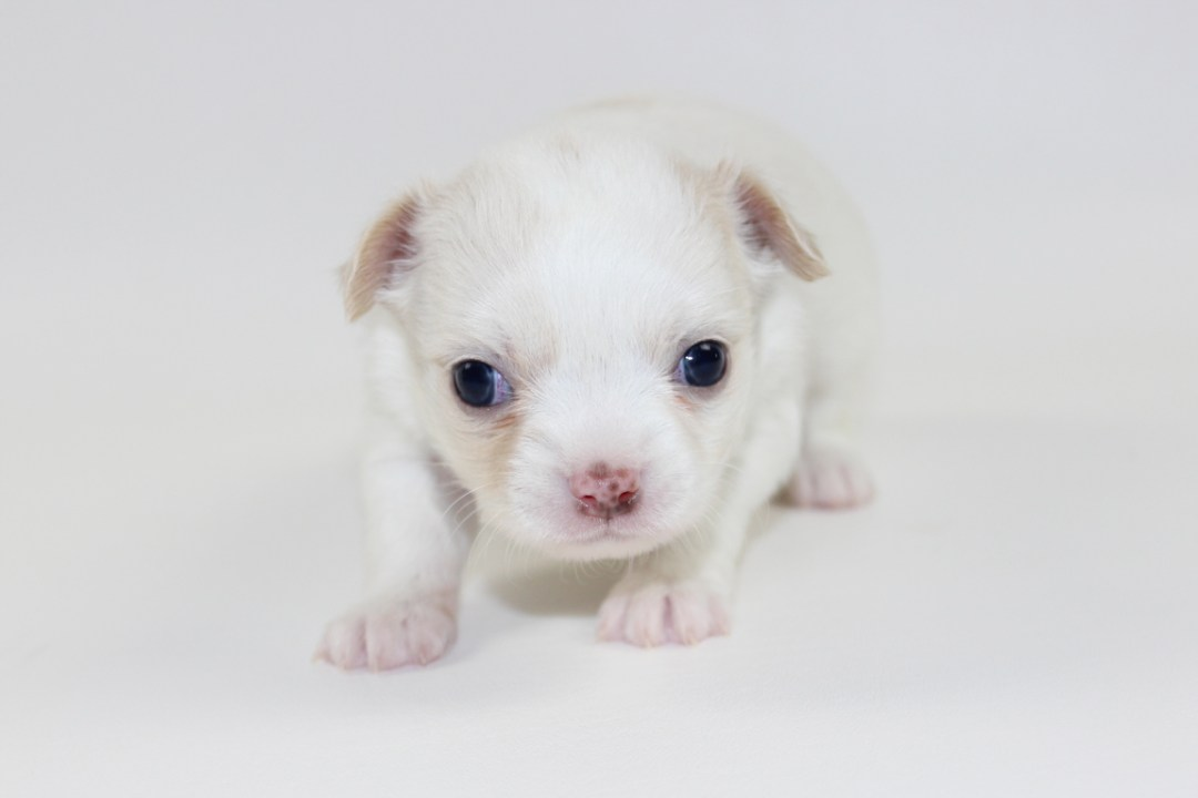 Thunder - 4 Weeks Old - Weight 1 lb 7.4 ozs