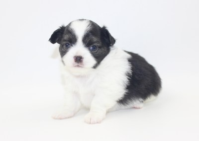 Him - 4 Weeks Old- Weight 1 lb 5.8 ozs