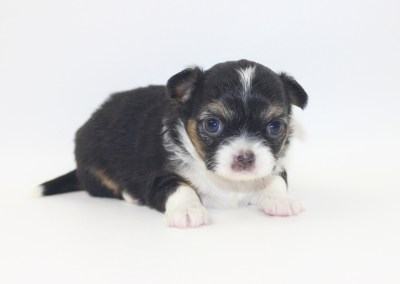 Bubbles - 4 Week Old- Weight 1 lb 7.7 ozs