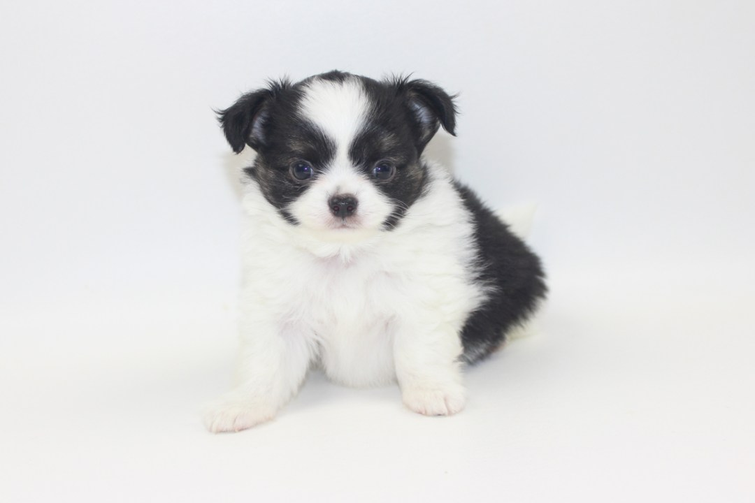 Him - 7 Weeks Old- Weight 1 lb 13.5 ozs