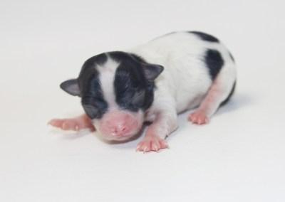Bella - Born October 25, 2018 Weight 4.1 ozs