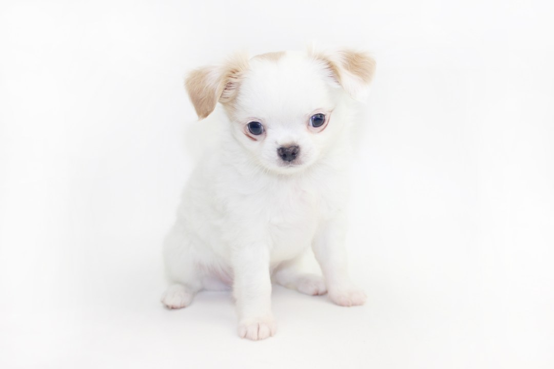 Troublemaker - 8 Weeks Old - 2 lbs 4 ozs