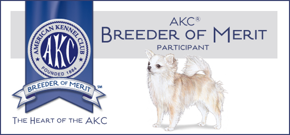 AKC Chihuahua Breeder of Merit