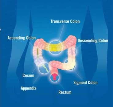 colon-image