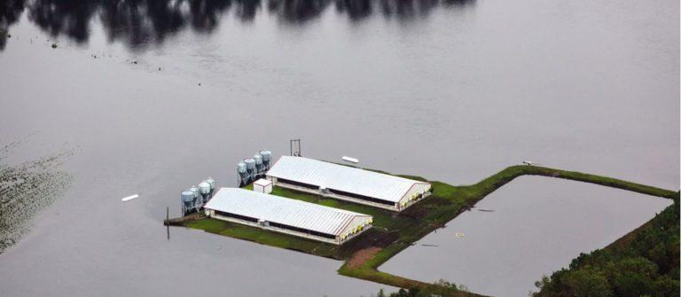 Hog waste lagoon floods