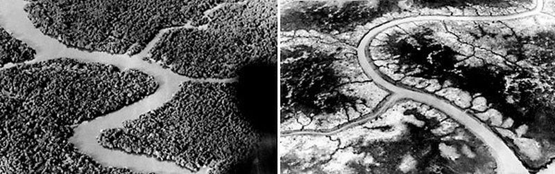 Before-and-after air views show the effects herbicides such as Agent Orange had when sprayed during the Vietnam war