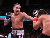 Bivol Castillo19