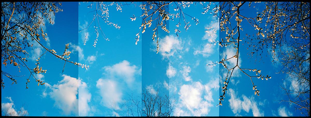 Spring Buds, Vermont. 2009