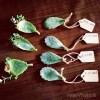 propagation, succulents, Wee Warhols, art class, austin