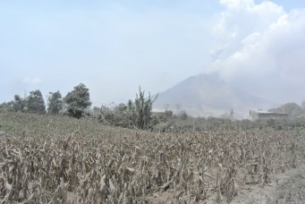 Gunung Sinabung continues to leak ash in the distance.