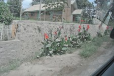 These flowers were a stark contrast to the gray scenery.