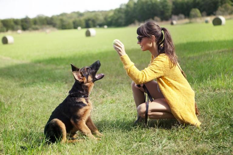 Dog Training For Human Beings