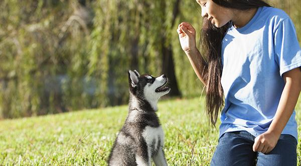 Image result for 5 Natural Tips on Calming Your Dog