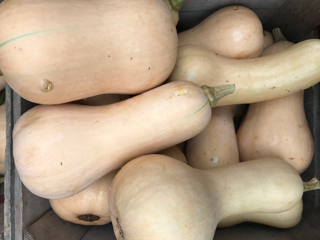 Featured Ingredient: Butternut Squash