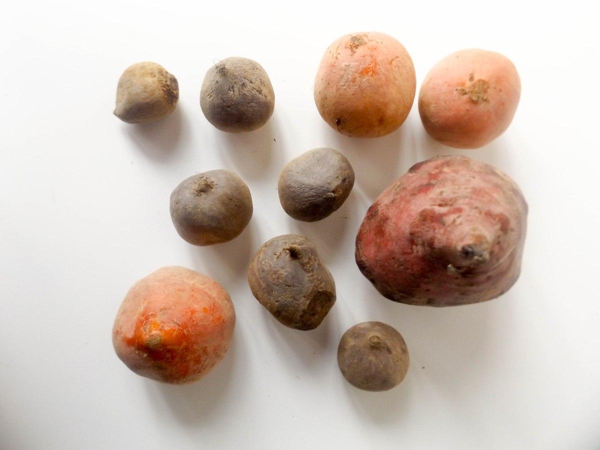 beets (1 of 1)-7.jpg