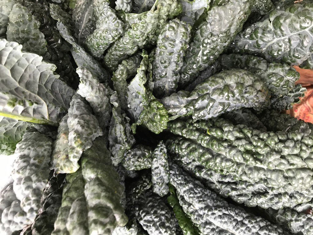 Featured Ingredient Kale
