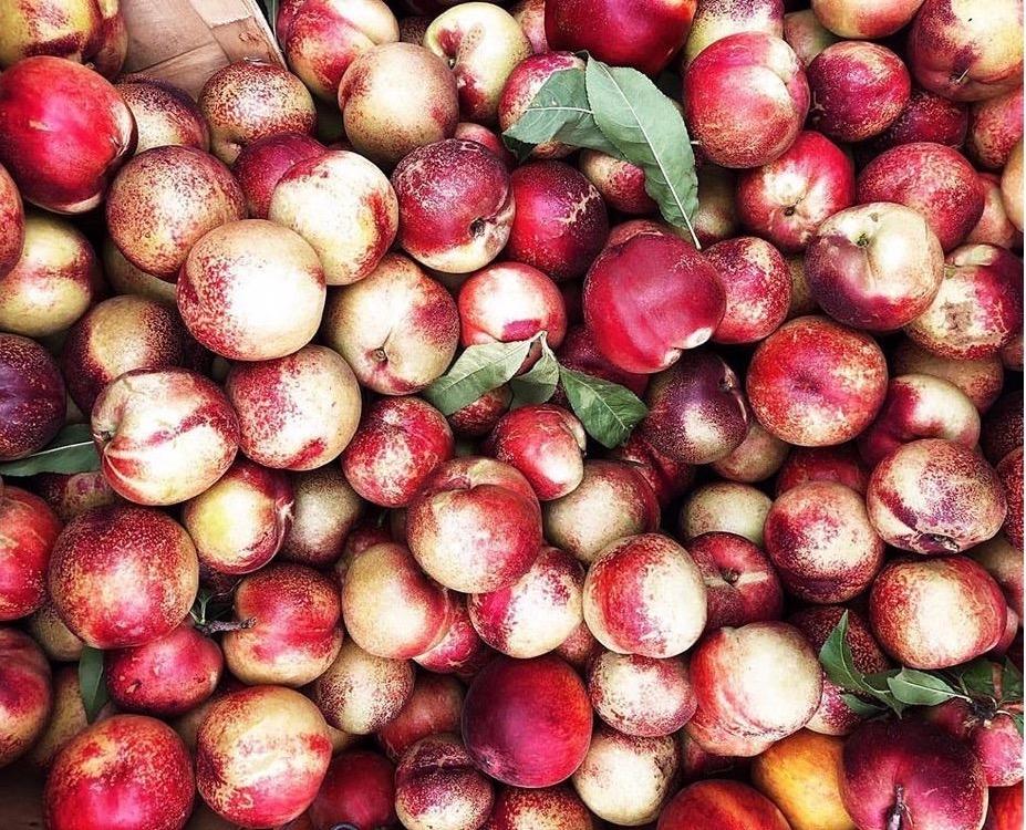 Featured Ingredient: Nectarines