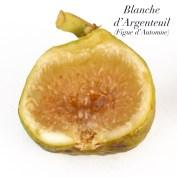 Blanche d'Argenteuil 3.2