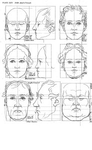 Art Students Guide to the Proportions of the Human Form