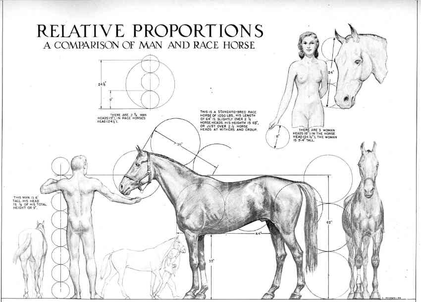 kayat kandi: Anatomy horse foot/hoof