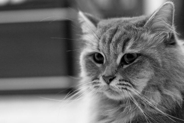#kucingkelabu - Dua Dalam Satu