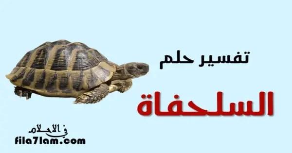 تفسير حلم السلحفاة في المنام ومعني رؤية السلاحف في الاحلام