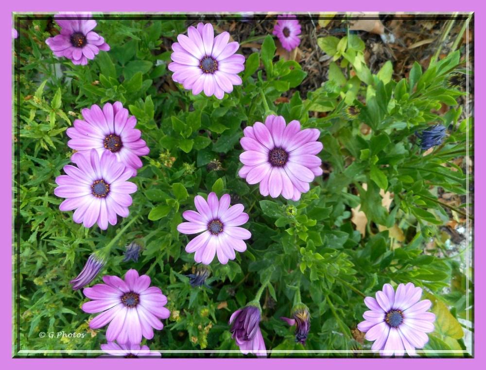 Photos - 11-09-2015 - Fleurs à l'arrêt du bus (4/5)
