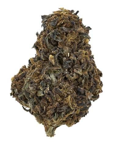 Susz CBD Konopny 10% Black Widow 1g Legalny Cena Legalna Medyczna Marihuana konopie siewne