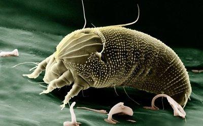 Comment protéger ses vêtement en laine des mites ?