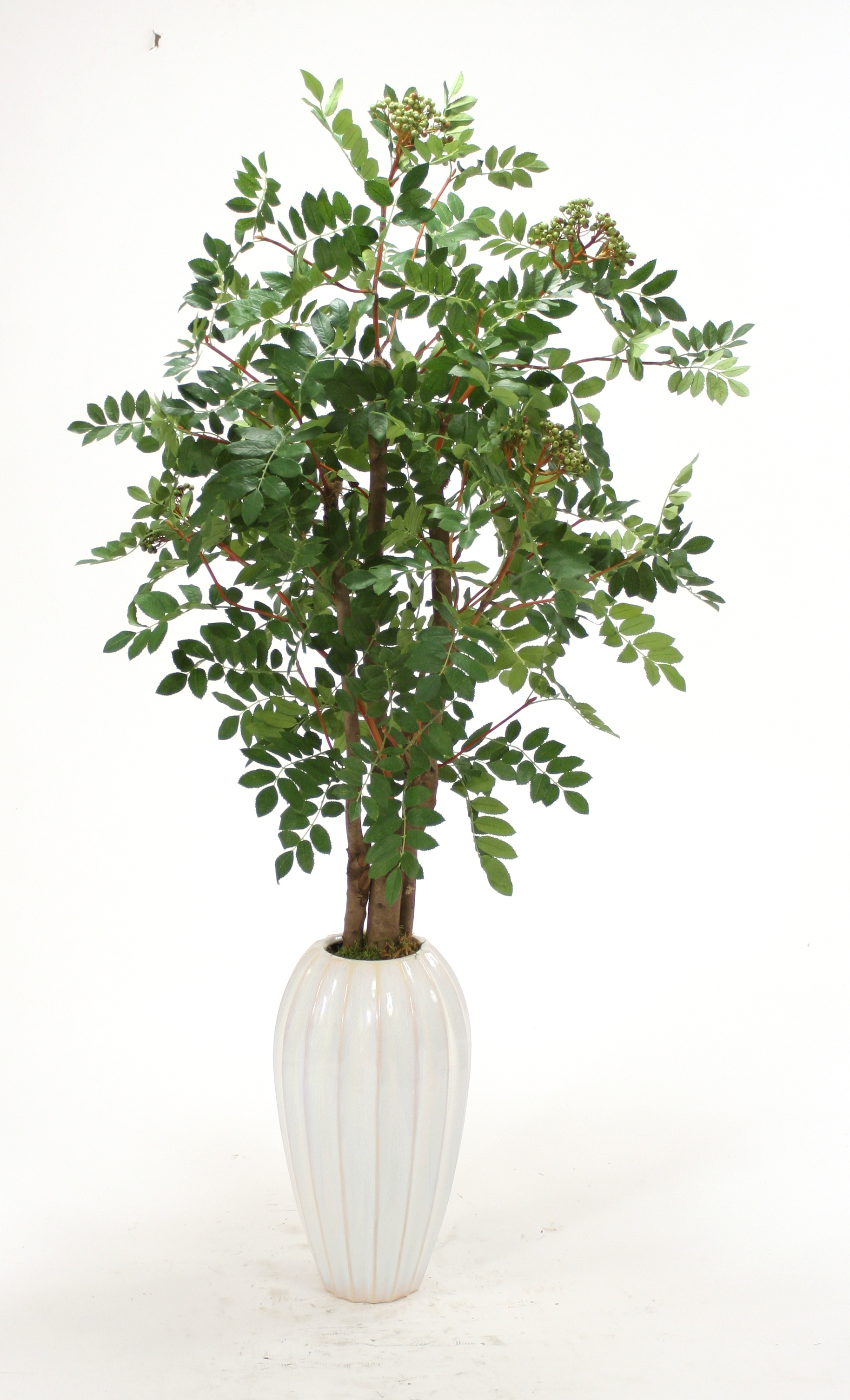 Silk Mountain Ash Floor Plant in Tall White Earthenware Vase  Free Shipping in USA  1001Shops