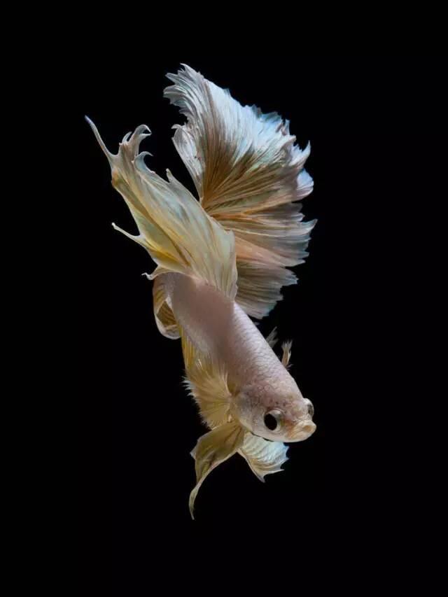 Fish Wallpaper Hd 苹果手机里的斗鱼壁纸,原来是他拍的! 数英
