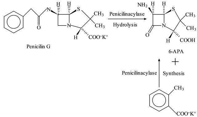 Optimization of Penicillin G Acylase Immobilization