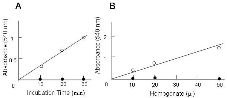 Purification of enzymatically inactive peptidylarginine