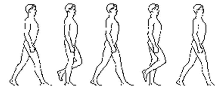 Running Gait Phase Diagram