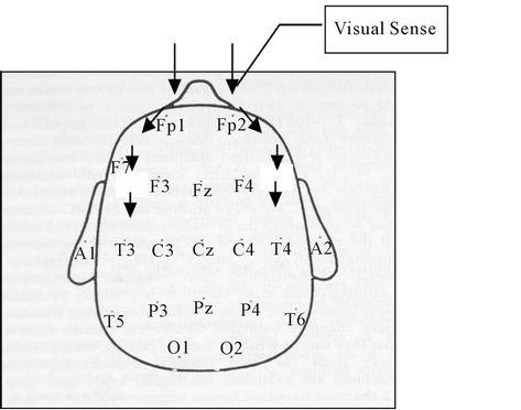 Biological Communication Behavior through Information