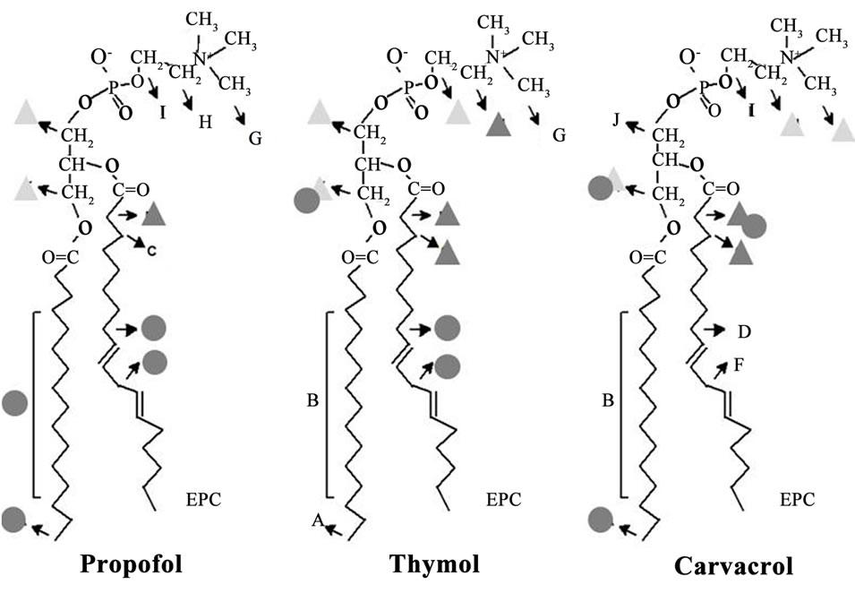 Effects of Gabaergic Phenols on Phospholipid Bilayers as