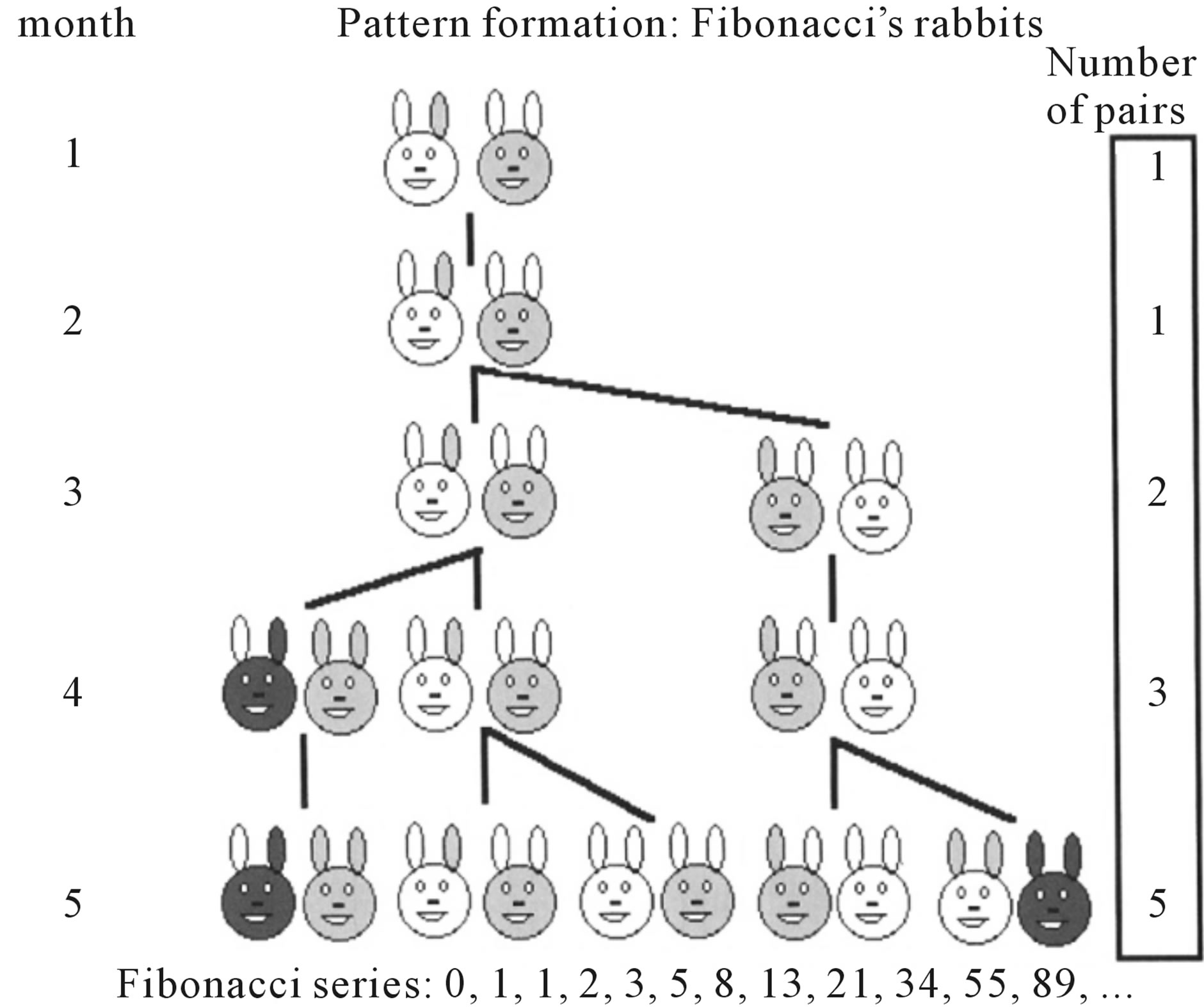 Occurrence Of Fibonacci Numbers In Development And Structure Of Animal Forms Phylogenetic