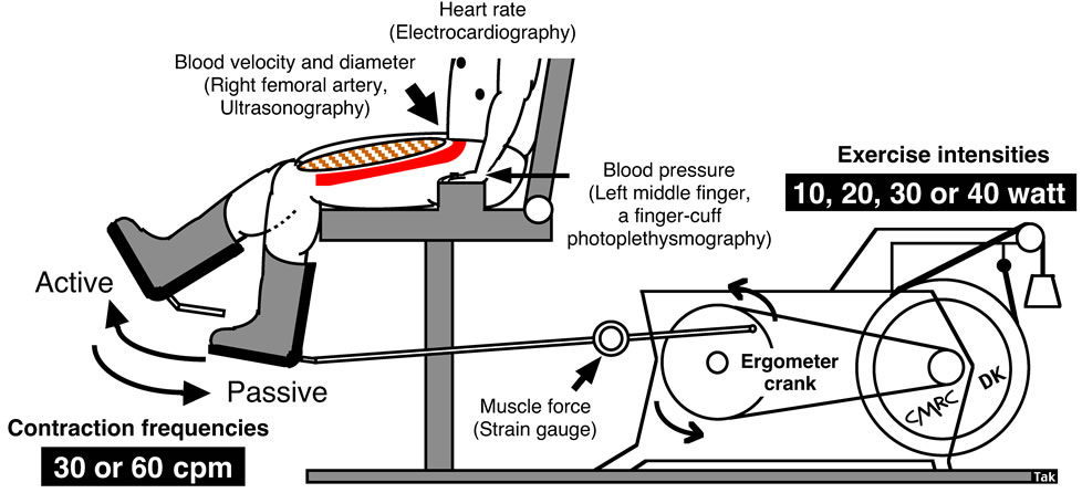 Measurement of the exercising blood flow during rhythmical