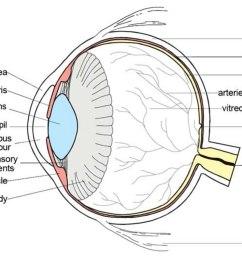teh eye diagram label wiring diagram forward biology eye diagram label [ 1151 x 889 Pixel ]
