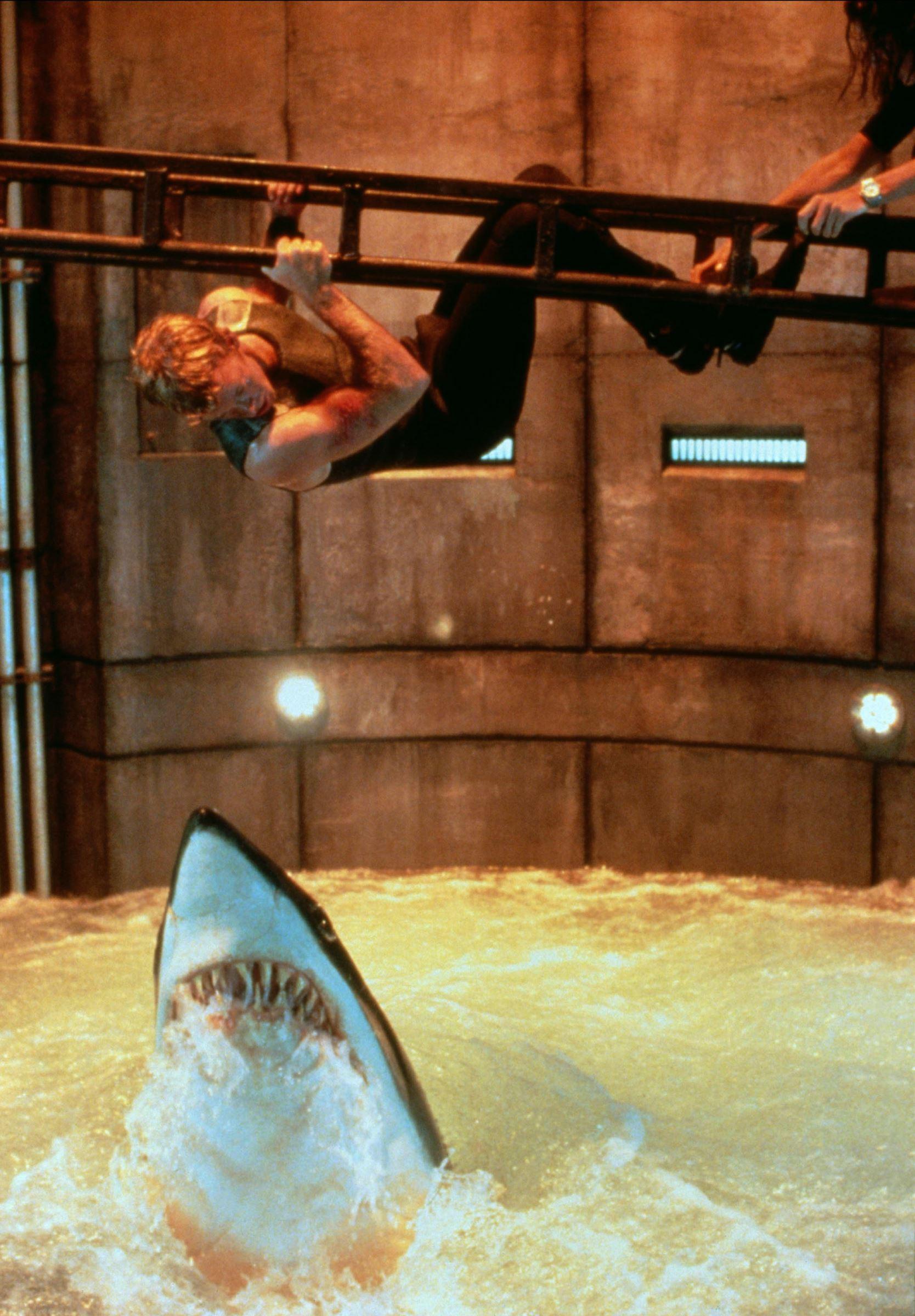 Instinct De Survie Histoire Vraie : instinct, survie, histoire, vraie, Troubles, Meilleurs, Films, Requins, Télé